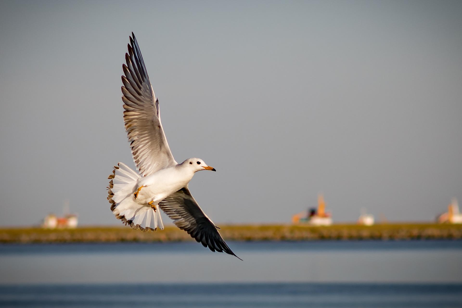 birds-3342542_1920