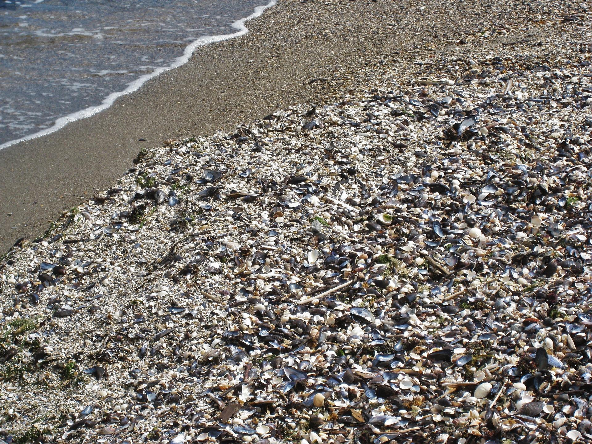 shell-beach-1332297_1920