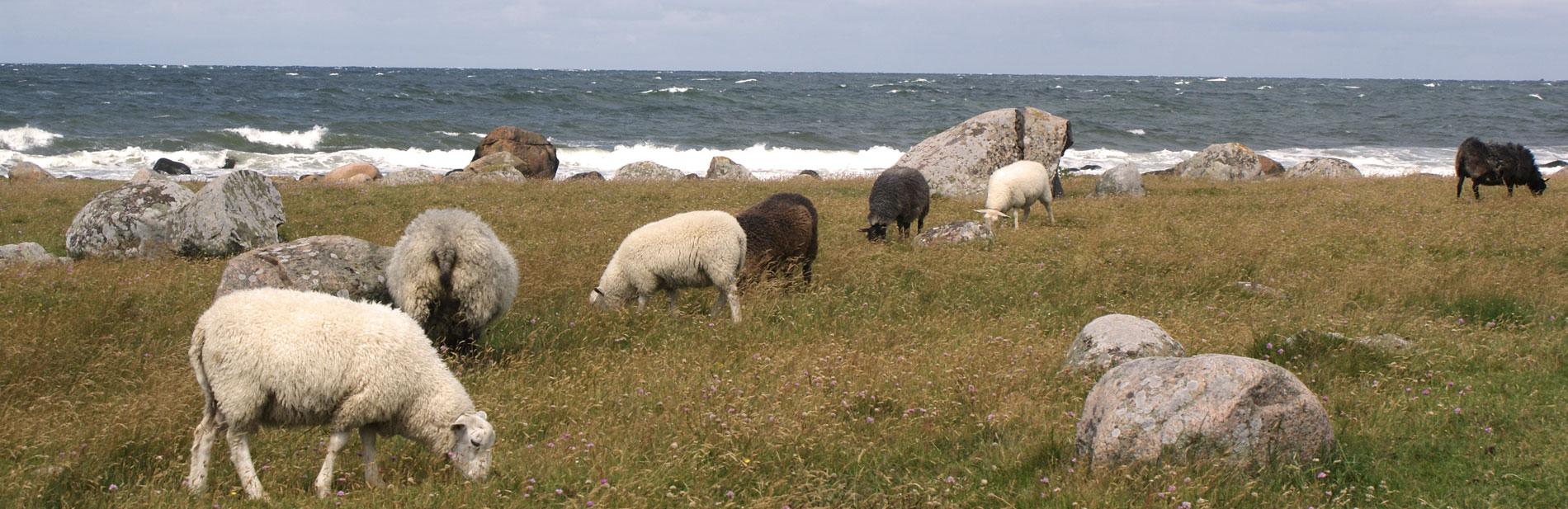 50_Strandgården-strandnära-ängar-1512