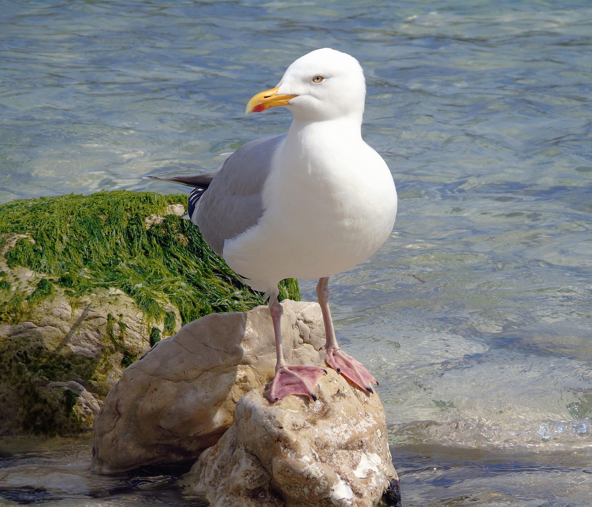 seagull-3419523_1920